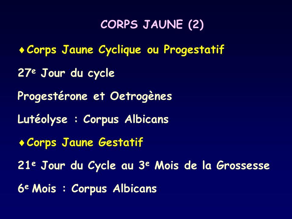 CORPS JAUNE (2)  Corps Jaune Cyclique ou Progestatif 27 e Jour du cycle Progestérone et Oetrogènes Lutéolyse : Corpus Albicans  Corps Jaune Gestatif