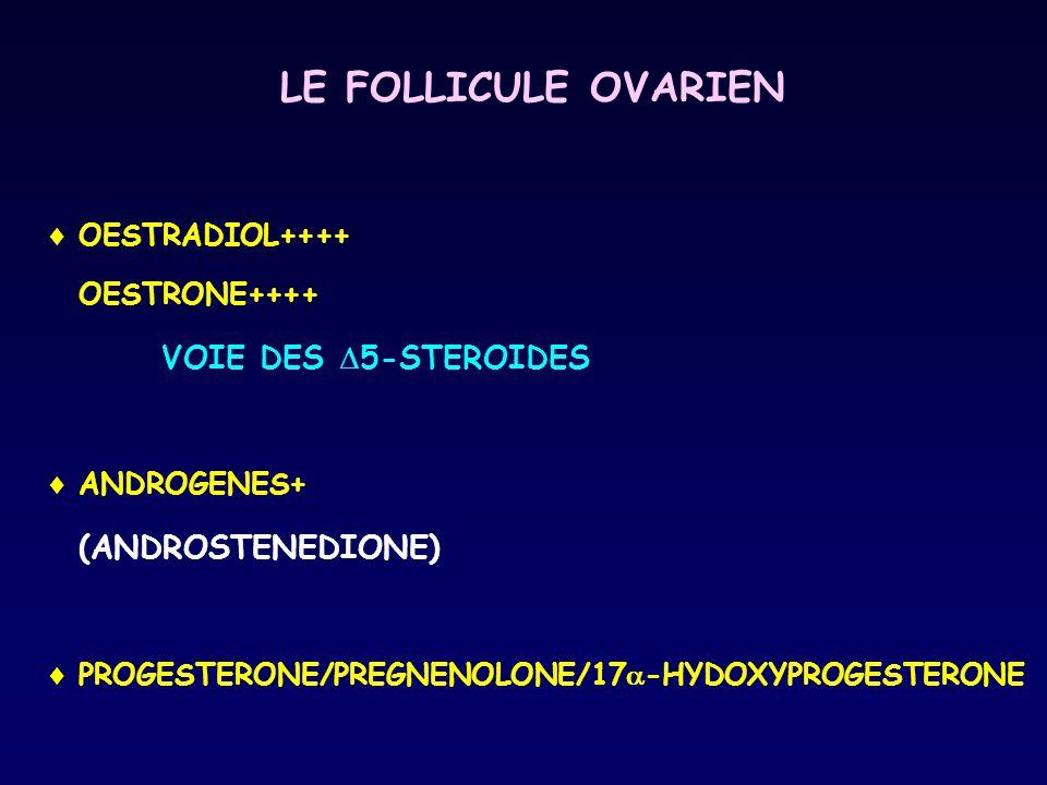 LE FOLLICULE OVARIEN  OESTRADIOL++++ OESTRONE++++ VOIE DES  5-STEROIDES  ANDROGENES+ (ANDROSTENEDIONE)  PROGESTERONE/PREGNENOLONE/17  -HYDOXYPROG