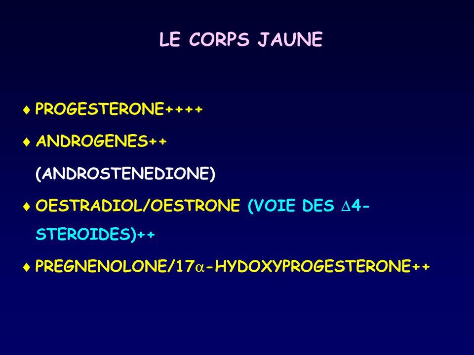 LE CORPS JAUNE  PROGESTERONE++++  ANDROGENES++ (ANDROSTENEDIONE)  OESTRADIOL/OESTRONE (VOIE DES  4- STEROIDES)++  PREGNENOLONE/17  -HYDOXYPROGES