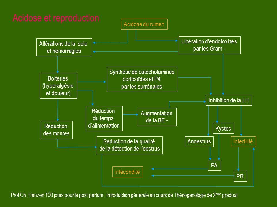 Prof Ch. Hanzen 100 jours pour le post-partum. Introduction générale au cours de Thériogenologie de 2 ème graduat Altérations de la sole et hémorragie
