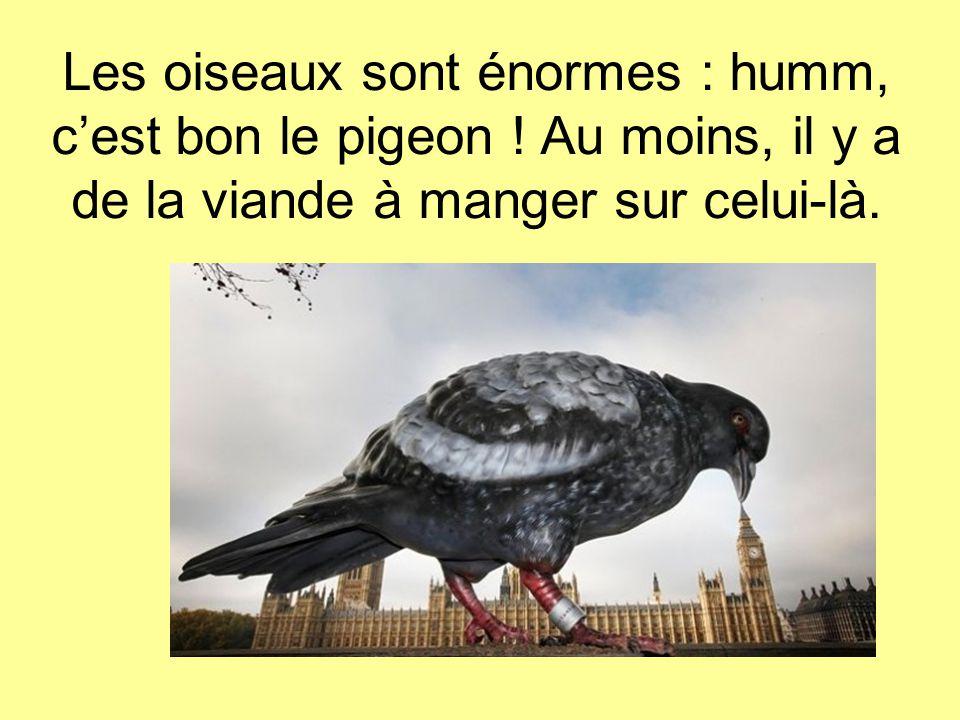 Les oiseaux sont énormes : humm, c'est bon le pigeon .