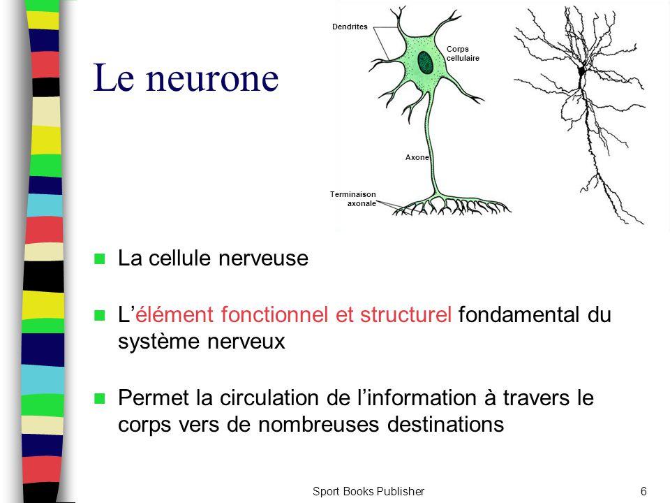 Sport Books Publisher6 Le neurone La cellule nerveuse L'élément fonctionnel et structurel fondamental du système nerveux Permet la circulation de l'in