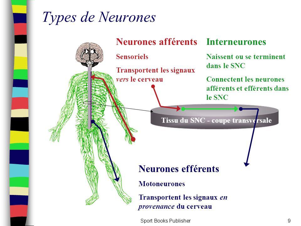 Sport Books Publisher9 Types de Neurones Neurones afférents Sensoriels Transportent les signaux vers le cerveau Neurones efférents Motoneurones Transp