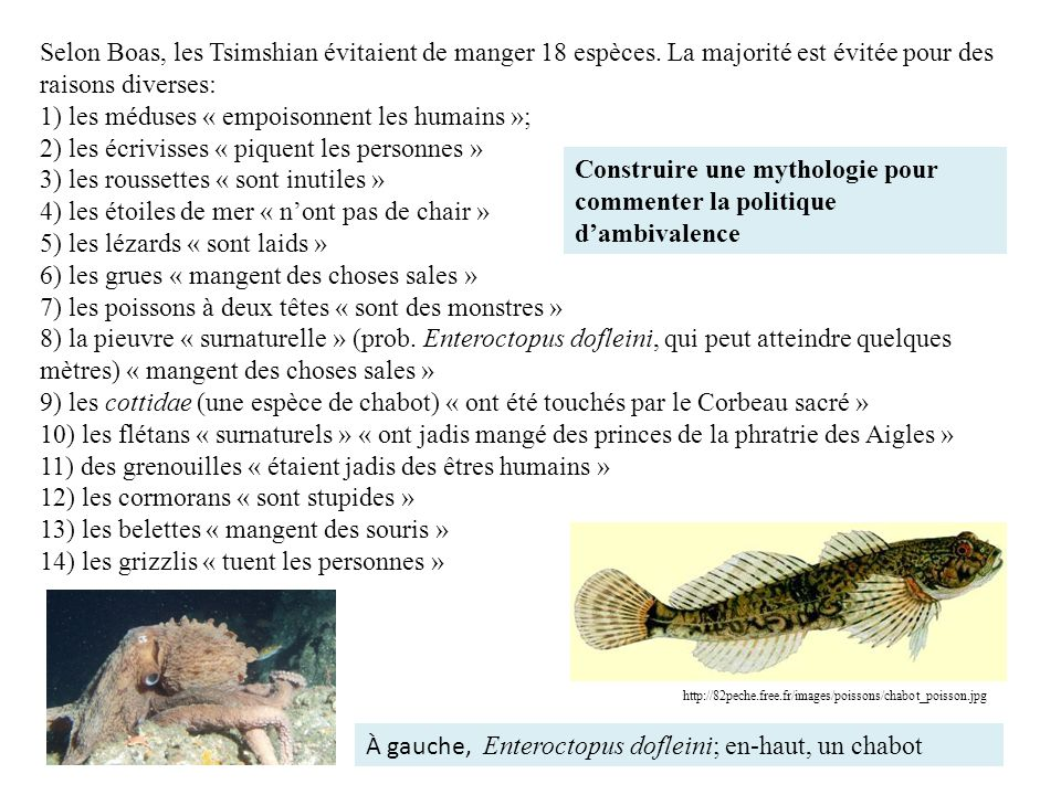 Selon Boas, les Tsimshian évitaient de manger 18 espèces. La majorité est évitée pour des raisons diverses: 1) les méduses « empoisonnent les humains