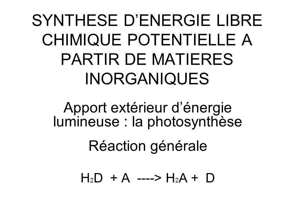 SYNTHESE D'ENERGIE LIBRE CHIMIQUE POTENTIELLE A PARTIR DE MATIERES INORGANIQUES Apport extérieur d'énergie lumineuse : la photosynthèse Réaction génér