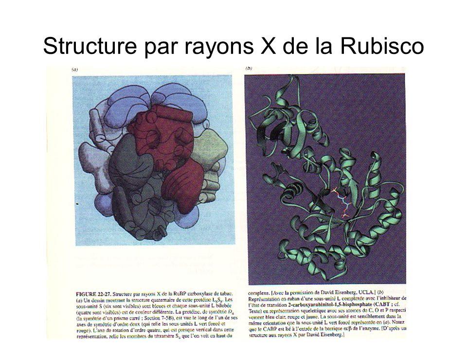 Fixation du CO2 par la Rubisco