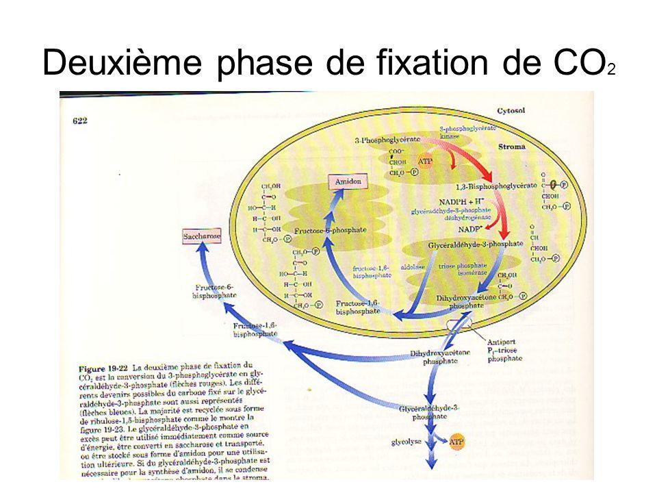 Deuxième phase de fixation de CO 2