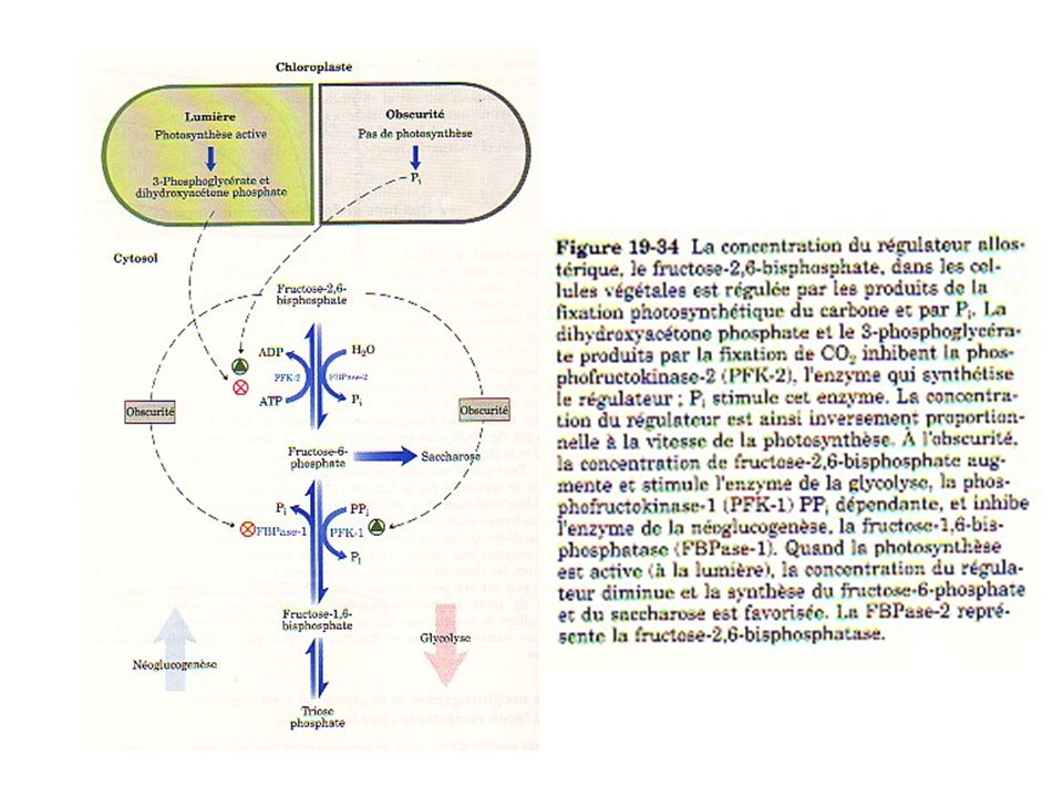 Synthèse d'amidon