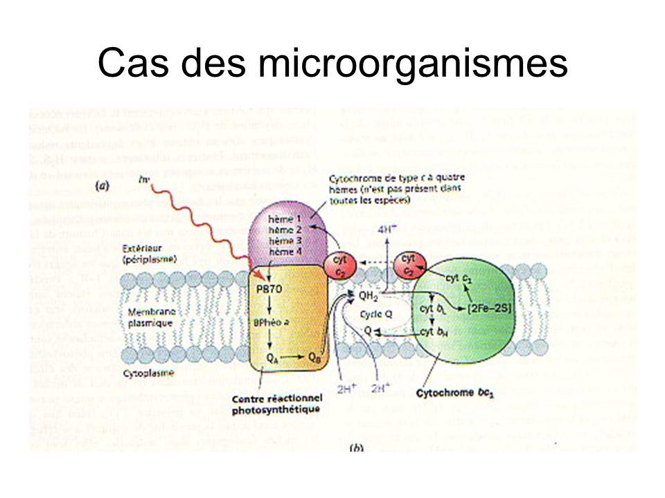 Exemple de Photosystème bactérien