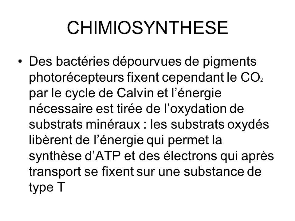 CHIMIOSYNTHESE Des bactéries dépourvues de pigments photorécepteurs fixent cependant le CO 2 par le cycle de Calvin et l'énergie nécessaire est tirée