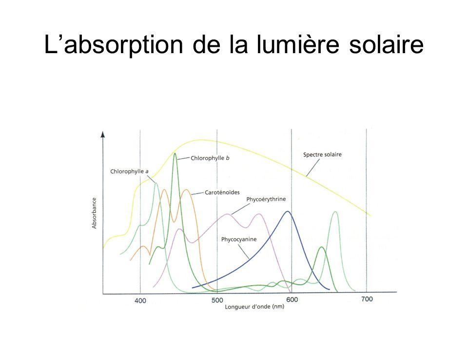 L'absorption de la lumière solaire