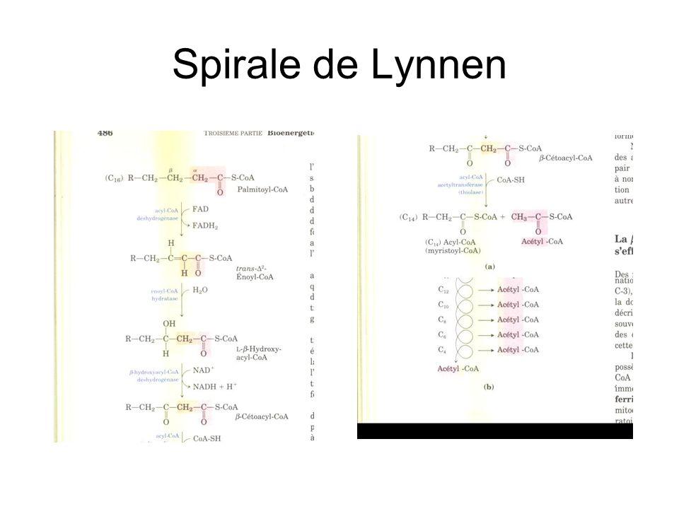 Spirale de Lynnen