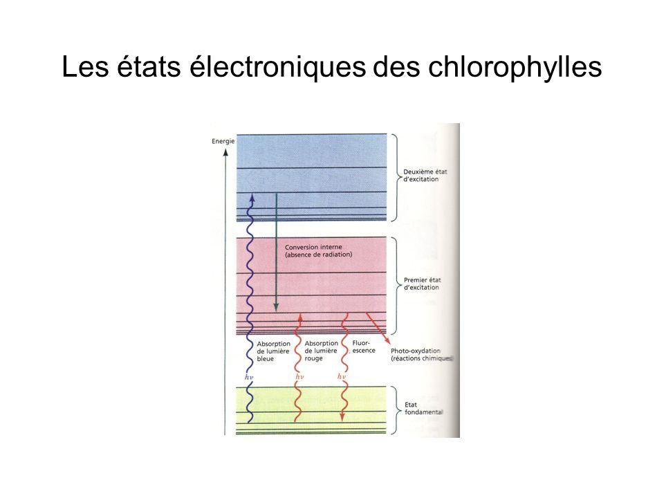 Les états électroniques des chlorophylles