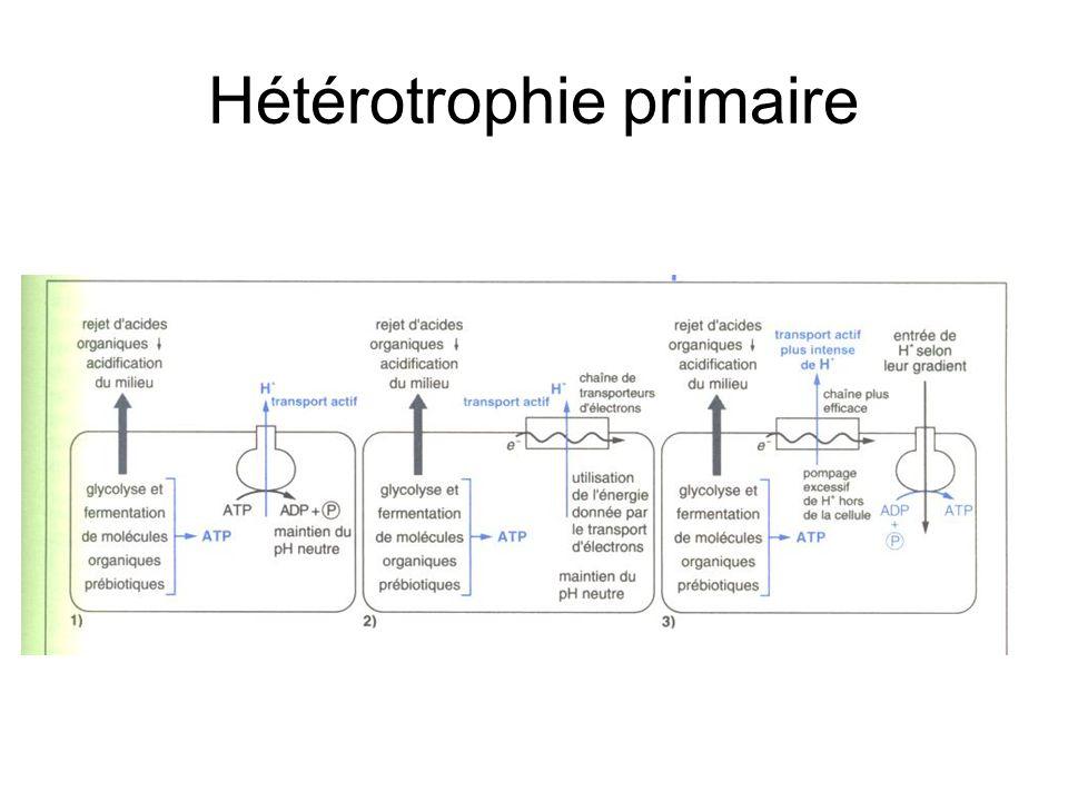 Hétérotrophie primaire