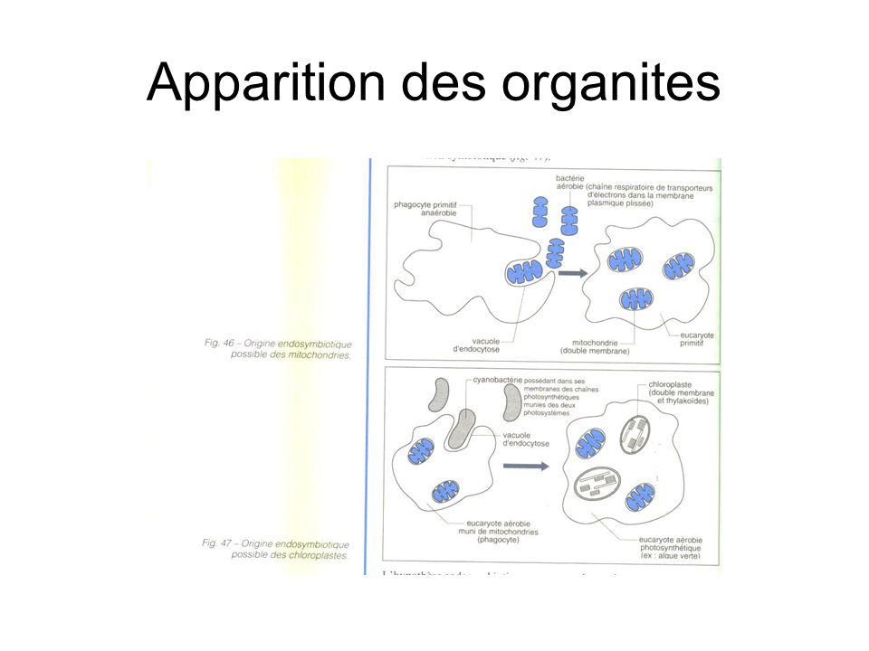 Conclusions : schéma de synthèse