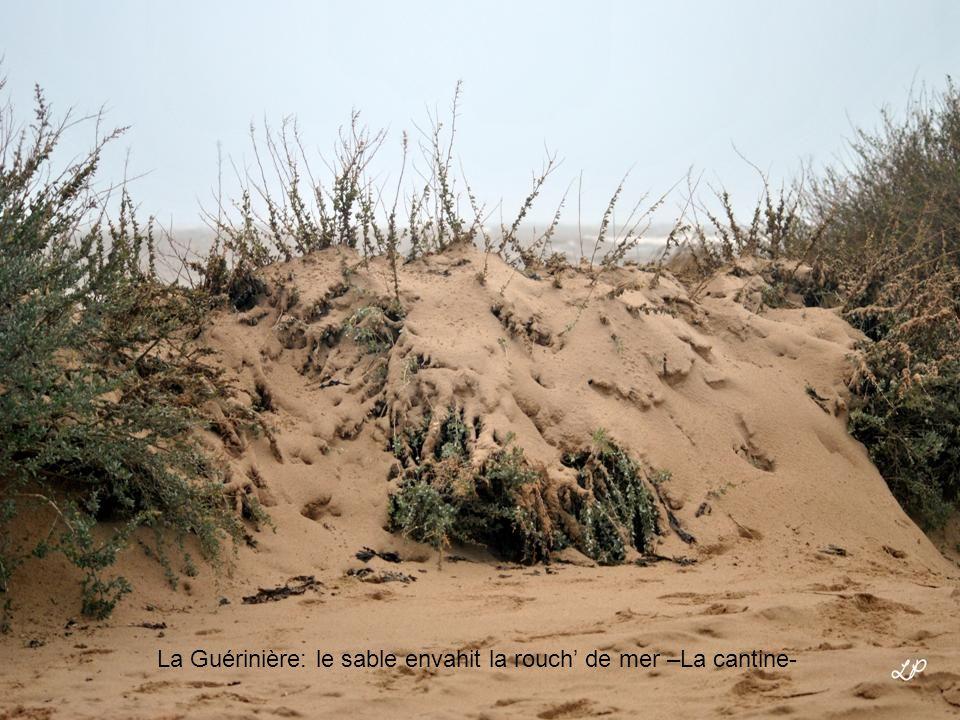 L' Epine: Luzéronde –les vagues grignotent la dune-