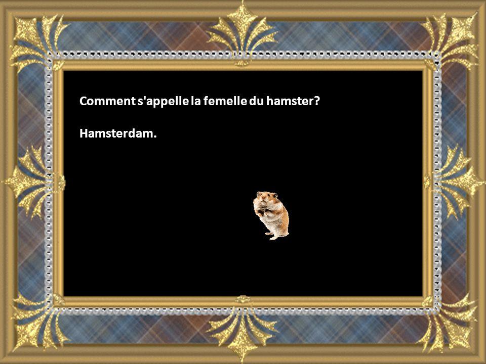 Comment s appelle la femelle du hamster? Hamsterdam.