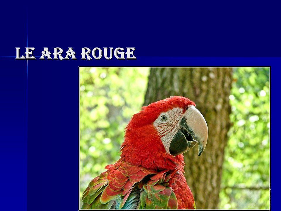 Aspect Physique Mesure 86 centimètres Pèse 1 kg Peut vivre 25 ans Couleurs Bleu clair sur la queue Jaune sur les ailes Bleu foncé le contour des ailes Rouge sur le corps Reflet doré