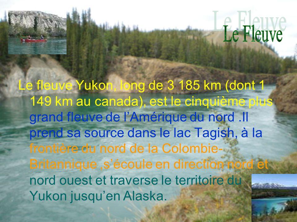 Le fleuve Yukon, long de 3 185 km (dont 1 149 km au canada), est le cinquième plus grand fleuve de l'Amérique du nord.Il prend sa source dans le lac T
