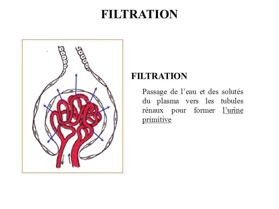 Passage de l'eau et des solutés du plasma vers les tubules rénaux pour former l'urine primitive FILTRATION