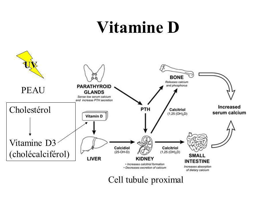 Vitamine D Cholestérol Vitamine D3 (cholécalciférol) PEAU UV Cell tubule proximal