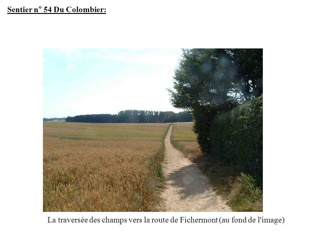 Sentier n° 54 Du Colombier: La traversée des champs vers la route de Fichermont (au fond de l image)
