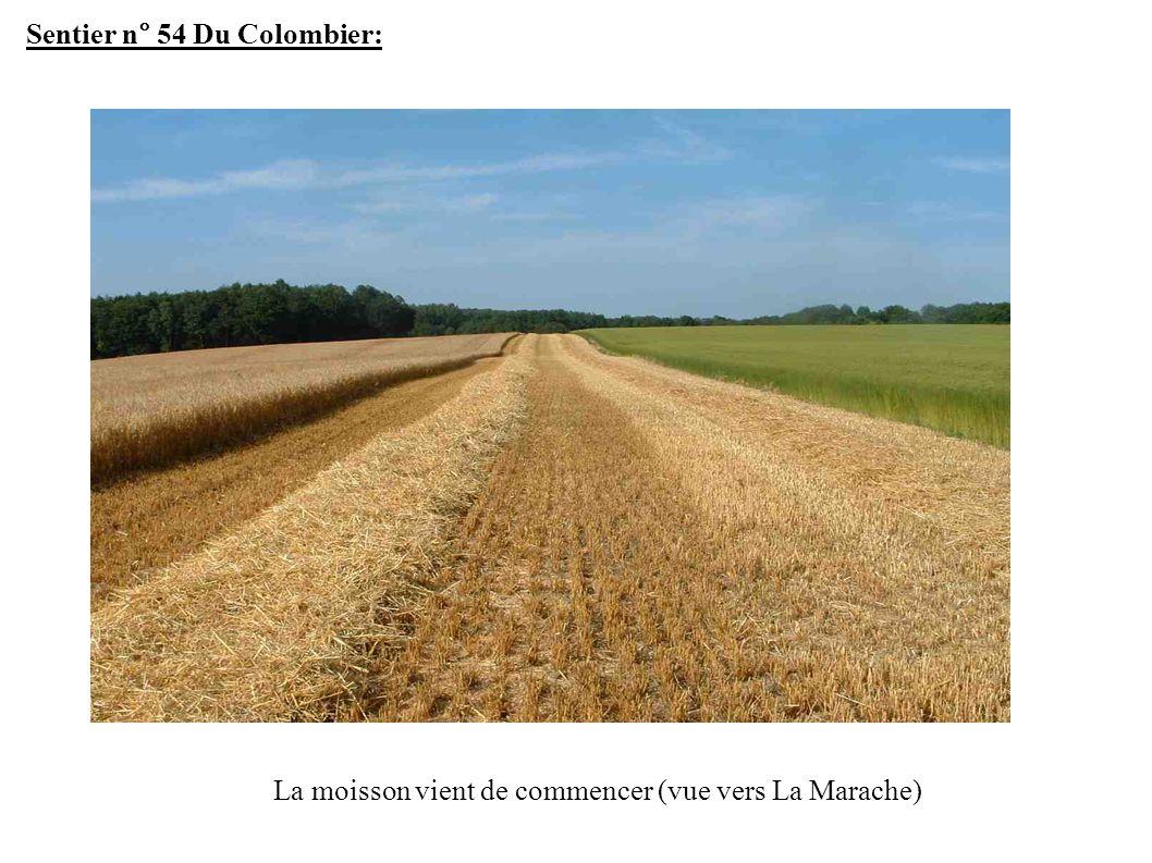 Sentier n° 54 Du Colombier: La moisson vient de commencer (vue vers La Marache)