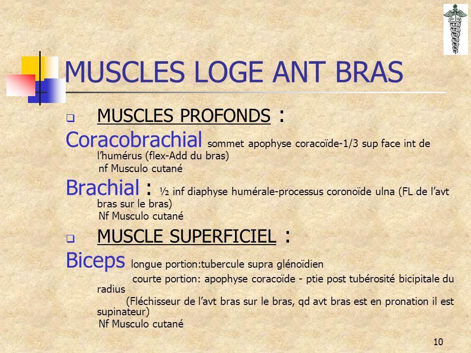 10 MUSCLES LOGE ANT BRAS  MUSCLES PROFONDS : Coracobrachial sommet apophyse coracoïde-1/3 sup face int de l'humérus (flex-Add du bras) nf Musculo cut