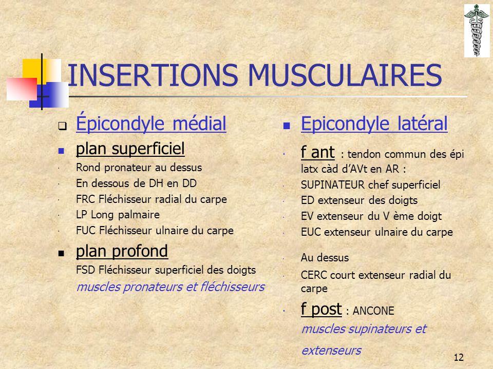 12 INSERTIONS MUSCULAIRES  Épicondyle médial plan superficiel · Rond pronateur au dessus · En dessous de DH en DD · FRC Fléchisseur radial du carpe ·