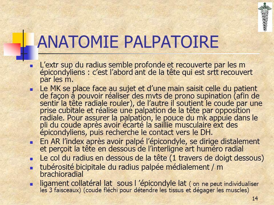 14 ANATOMIE PALPATOIRE L'extr sup du radius semble profonde et recouverte par les m épicondyliens : c'est l'abord ant de la tête qui est srtt recouver