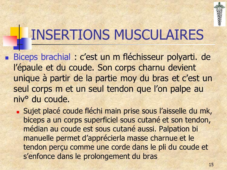 15 INSERTIONS MUSCULAIRES Biceps brachial : c'est un m fléchisseur polyarti. de l'épaule et du coude. Son corps charnu devient unique à partir de la p