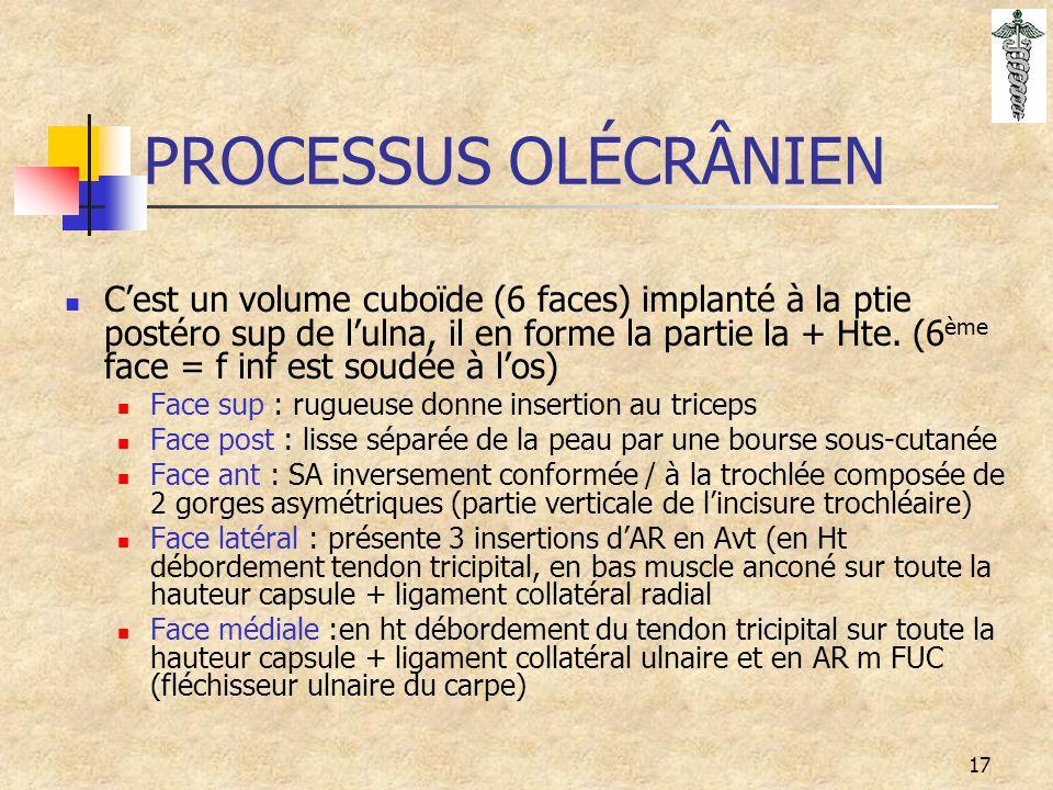 17 PROCESSUS OLÉCRÂNIEN C'est un volume cuboïde (6 faces) implanté à la ptie postéro sup de l'ulna, il en forme la partie la + Hte. (6 ème face = f in