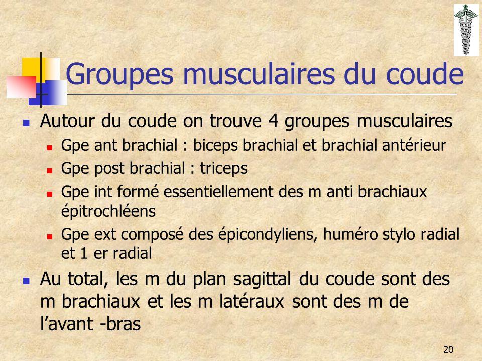 20 Groupes musculaires du coude Autour du coude on trouve 4 groupes musculaires Gpe ant brachial : biceps brachial et brachial antérieur Gpe post brac