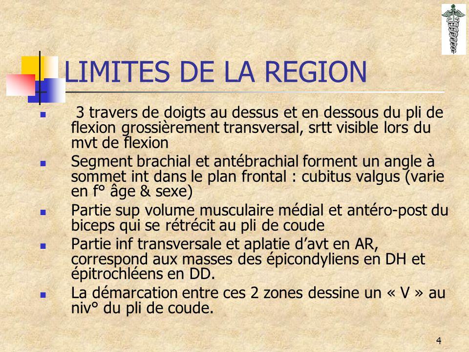 15 INSERTIONS MUSCULAIRES Biceps brachial : c'est un m fléchisseur polyarti.