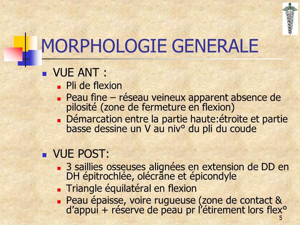 5 MORPHOLOGIE GENERALE VUE ANT : Pli de flexion Peau fine – réseau veineux apparent absence de pilosité (zone de fermeture en flexion) Démarcation ent