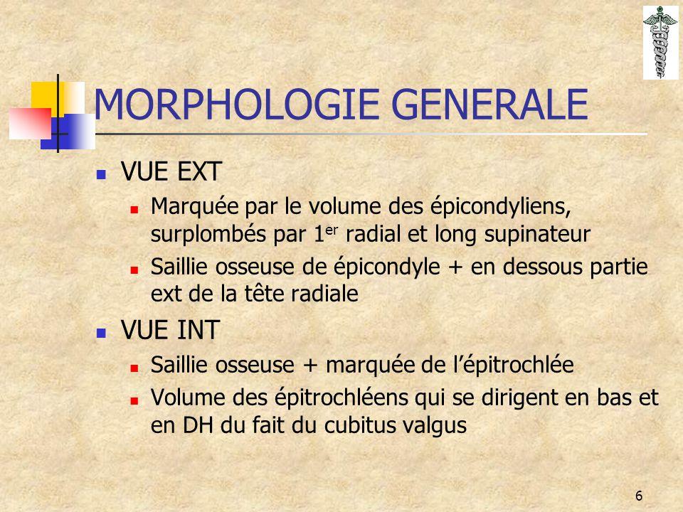 6 MORPHOLOGIE GENERALE VUE EXT Marquée par le volume des épicondyliens, surplombés par 1 er radial et long supinateur Saillie osseuse de épicondyle +