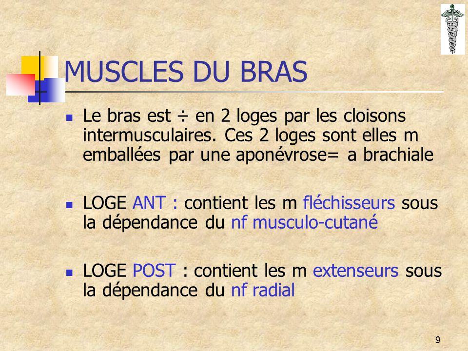 10 MUSCLES LOGE ANT BRAS  MUSCLES PROFONDS : Coracobrachial sommet apophyse coracoïde-1/3 sup face int de l'humérus (flex-Add du bras) nf Musculo cutané Brachial : ½ inf diaphyse humérale-processus coronoïde ulna (FL de l'avt bras sur le bras) Nf Musculo cutané  MUSCLE SUPERFICIEL : Biceps longue portion:tubercule supra glénoïdien courte portion: apophyse coracoïde - ptie post tubérosité bicipitale du radius (Fléchisseur de l'avt bras sur le bras, qd avt bras est en pronation il est supinateur) Nf Musculo cutané
