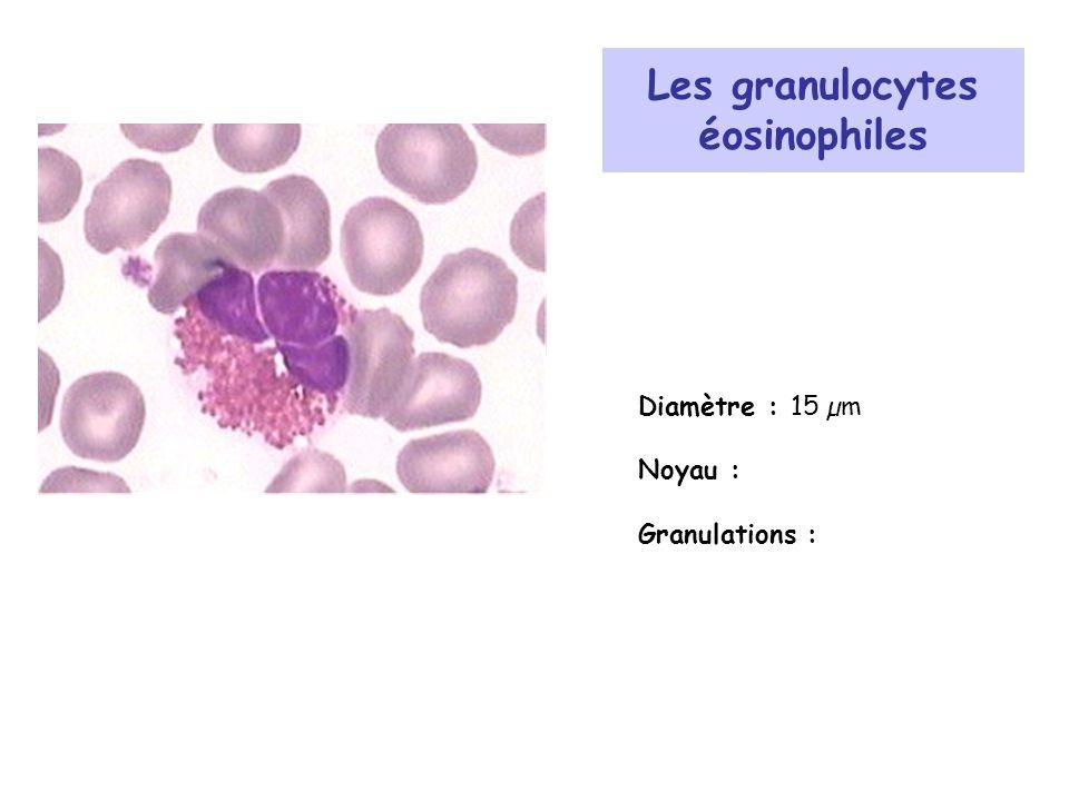 Les granulocytes éosinophiles Diamètre : 15 µm Noyau : Granulations :