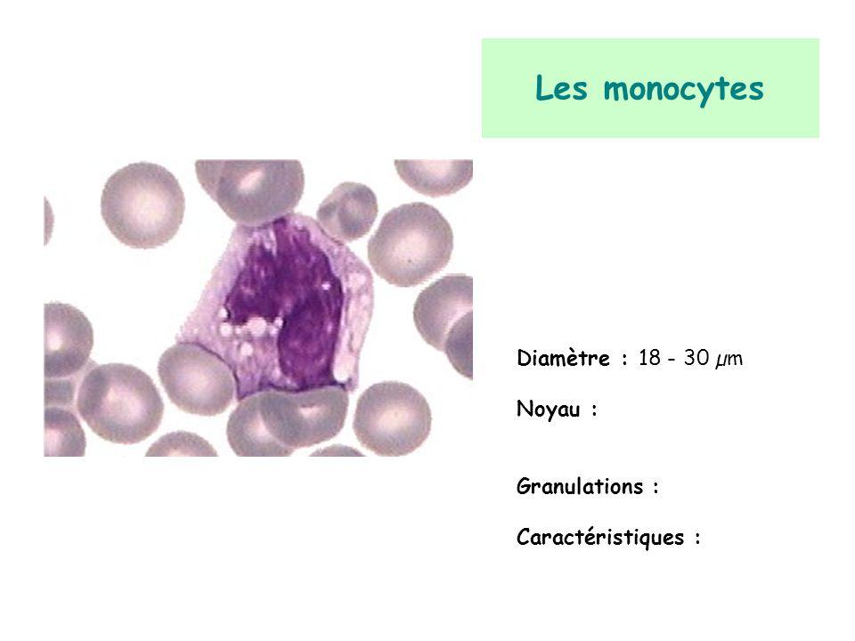 Les monocytes Diamètre : 18 - 30 µm Noyau : Granulations : Caractéristiques :