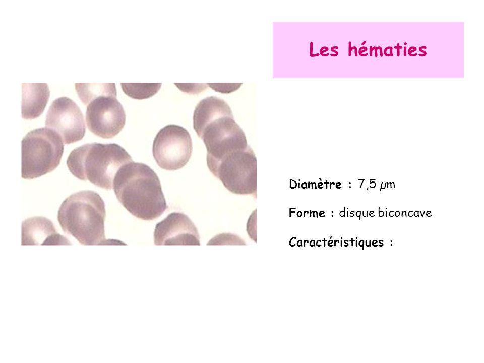 Les hématies Diamètre : 7,5 µm Forme : disque biconcave Caractéristiques :