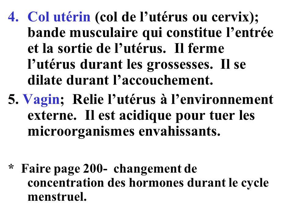 4.Col utérin (col de l'utérus ou cervix); bande musculaire qui constitue l'entrée et la sortie de l'utérus.
