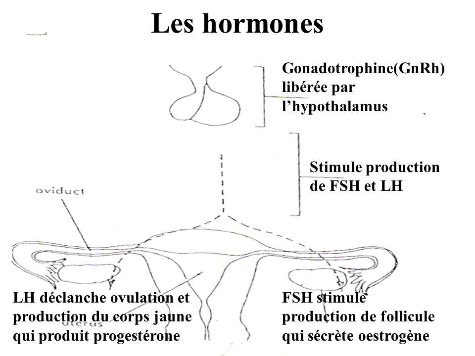 Les hormones Gonadotrophine(GnRh) libérée par l'hypothalamus Stimule production de FSH et LH FSH stimule production de follicule qui sécrète oestrogèn