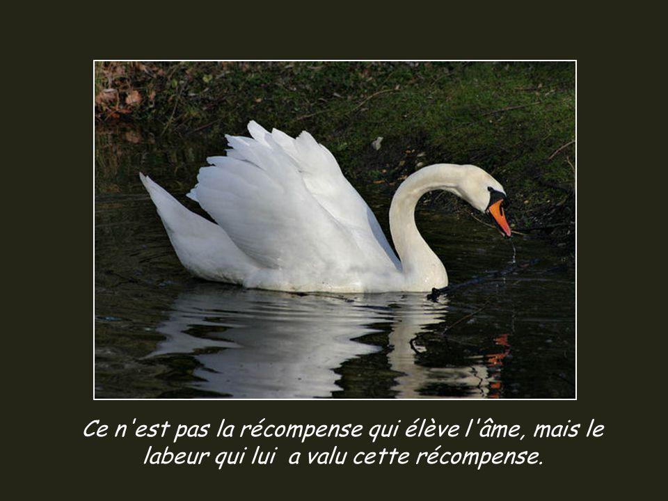 La vie est faite d une succession de leçons qui doivent être vécues pour êtres comprises!