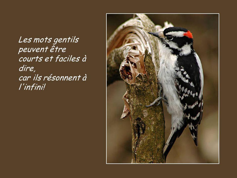 Les mots gentils peuvent être courts et faciles à dire, car ils résonnent à l infini!