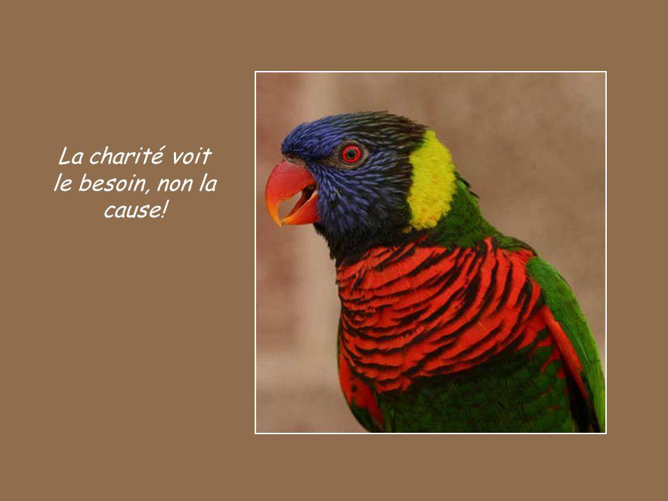 La charité voit le besoin, non la cause!