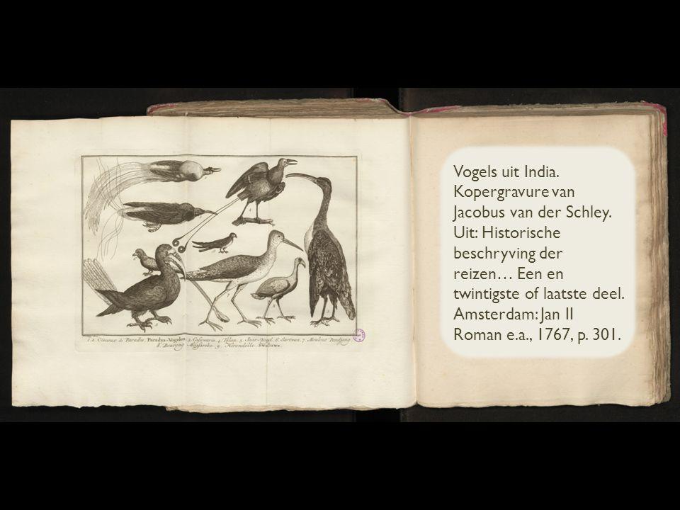 Vogels uit India. Kopergravure van Jacobus van der Schley.