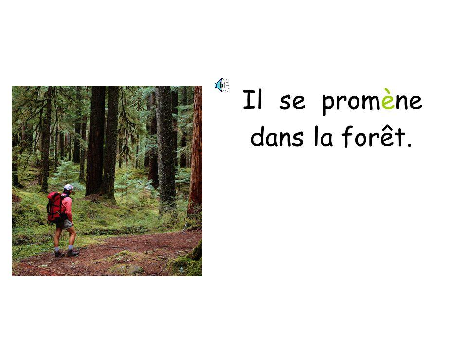 Il se promène dans la forêt.