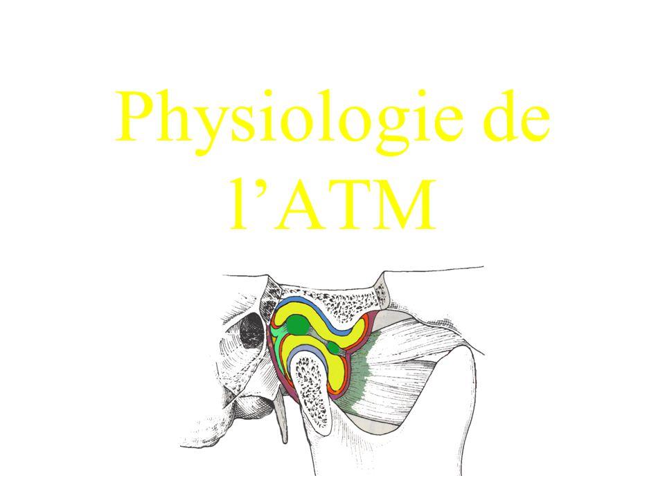 ATM = suture Arguments phylogéniques: ancienne ligne suturale Arguments ontogéniques: 2 blastèmes vont former l'ATM, un condylien et un glénoïdien asynchronisme de développement entre le massif facial et cérébral
