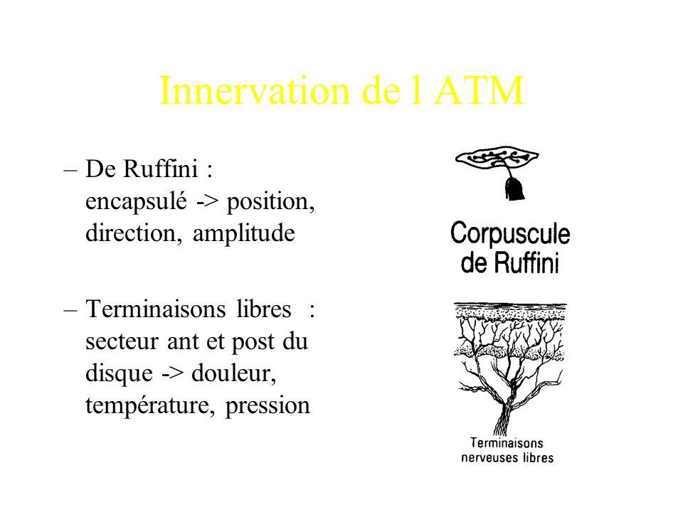 Innervation de l ATM –De Ruffini : encapsulé -> position, direction, amplitude –Terminaisons libres : secteur ant et post du disque -> douleur, tempér