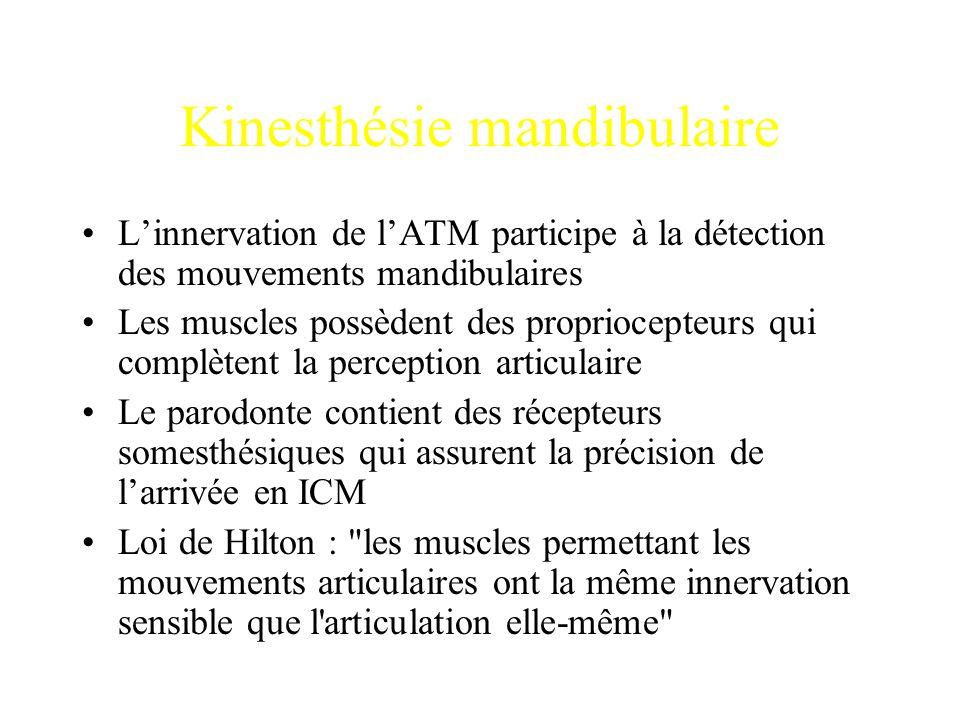 Kinesthésie mandibulaire L'innervation de l'ATM participe à la détection des mouvements mandibulaires Les muscles possèdent des propriocepteurs qui co
